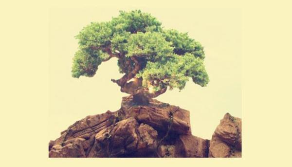 为什么孙悟空就变了次松树 菩提老祖就将他赶下山